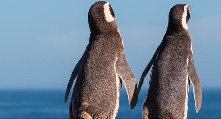 Comenzó la vigilia de pingüinos 2018