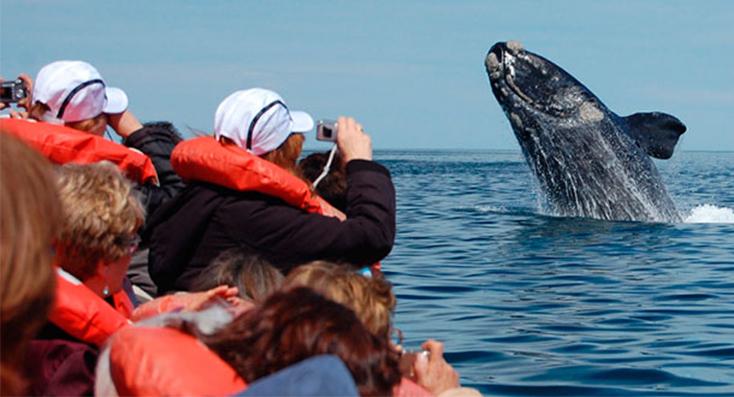 Se viene la temporada de avistaje de ballenas