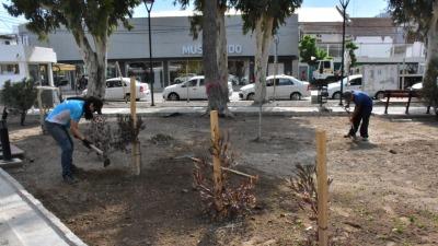 Sastre inaugurará en diciembre la remodelación de la plaza San Martín - El Diario de Madryn